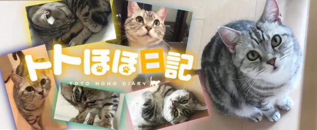 作家・角田光代さんが綴る愛猫との日々♪