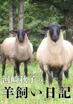 【連載第17回】河﨑秋子の羊飼い日記「羊は産まれた、桜はまだかいな」