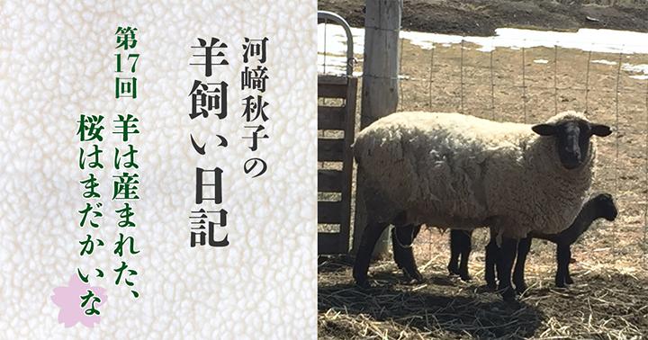 母羊「(ドヤァ…)」